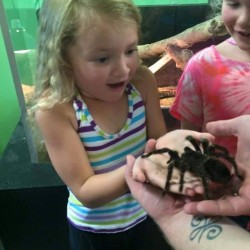 An excited little guest meeting Gretchen the tarantula!