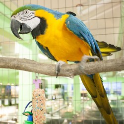 Buster the Macaw