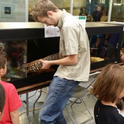 Brandon bringing out the Argentine Tegu