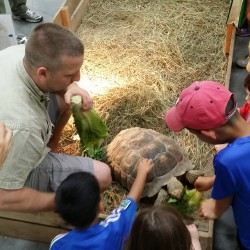 "Mike and some kids feeding ""Franklin"" the Sulcata Tortoise"