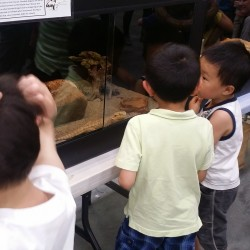 Kids looking at the Bearded Dragon