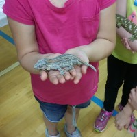 Holding and learning about geckos!