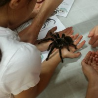 Brave students learning about the Salmon Pink Bird Eating Tarantula!