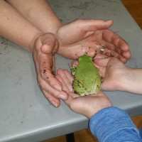 Students learning about White Lipped Tree Frog