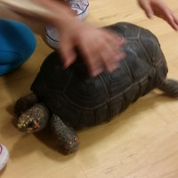Students learning about a Red Foot Tortoise