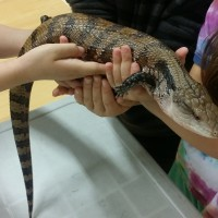 Students holding a Blue Tongue Skink