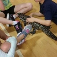 Students learning about an Argentine Tegu
