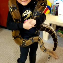 This is Raina holding Nebula our largest boa constrictor. Nebula is about 7.5 feet long and was actually found in a basement suite after her owners moved out and left her there in her enclosure! Not the most responsible way to part with your pet…