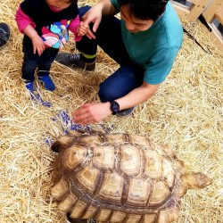 Meet our larger tortoises! Up to 110 lbs!